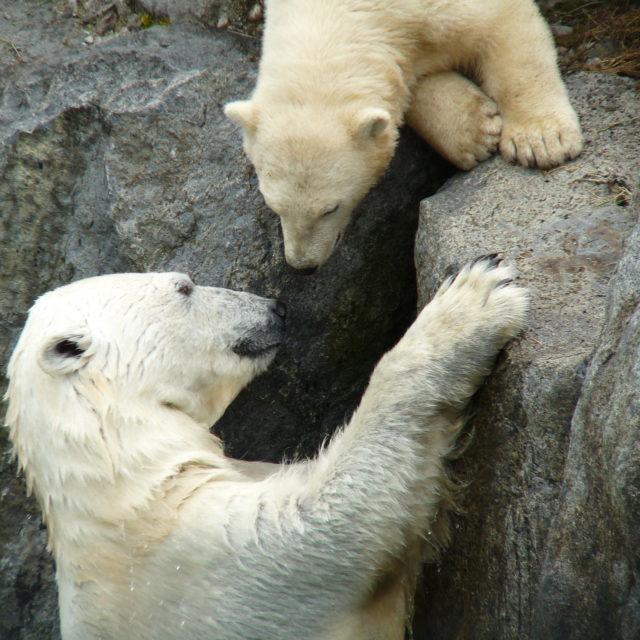 https://pelerinages.labonnenouvelle.net/wp-content/uploads/2019/04/Zoo-sauvage-de-St-Félicien-c-Yves-Ouellet-640x640.jpg